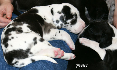 032910_fred_1